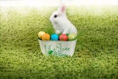 Coelho e ovos da páscoa pequenos engraçados Foto de Stock Royalty Free