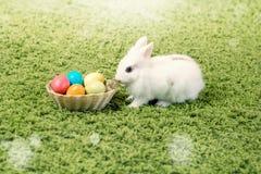 Coelho e ovos da páscoa pequenos engraçados Imagem de Stock