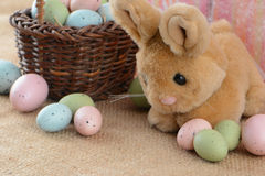 Coelho e ovos de Easter Imagem de Stock