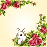 Coelho e rosas Fotografia de Stock