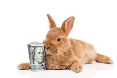 Coelho e um pacote de dinheiro Fotos de Stock