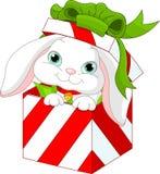 Coelho em uma caixa de presente do Natal Imagens de Stock