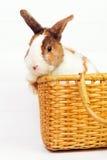 Coelho em uma cesta Imagens de Stock