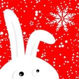 Coelho engraçado no fundo nevando do Natal vermelho Fotografia de Stock Royalty Free