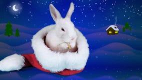 Coelho engraçado que lava suas cara e orelha no chapéu de Santa, preparando-se para o Natal vídeos de arquivo