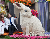 Coelho gigante na parada da bacia de Rosa Fotografia de Stock