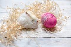 Coelho macio branco doce no feno e fundo de madeira branco ao lado dos ovos da páscoa brilhantes pasteis imagem de stock royalty free