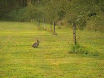 Coelho na grama verde Foto de Stock
