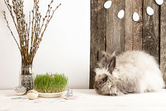 Coelho, ovos da páscoa, ramo do salgueiro, grama, festão dos ovos da páscoa Foto de Stock