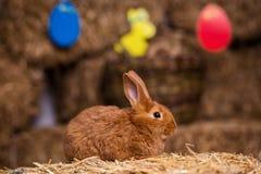 Coelho pequeno engraçado entre os ovos da páscoa na grama da veludinha, wi dos coelhos Foto de Stock Royalty Free