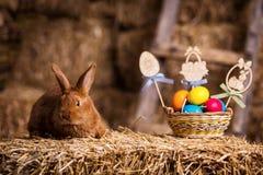 Coelho pequeno engraçado entre os ovos da páscoa na grama da veludinha, wi dos coelhos Imagens de Stock Royalty Free