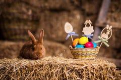 Coelho pequeno engraçado entre os ovos da páscoa na grama da veludinha, wi dos coelhos Fotografia de Stock Royalty Free