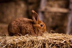 Coelho pequeno engraçado entre os ovos da páscoa na grama da veludinha, wi dos coelhos Imagem de Stock