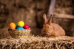 Coelho pequeno engraçado entre os ovos da páscoa na grama da veludinha, wi dos coelhos Imagens de Stock