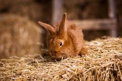 Coelho pequeno engraçado entre os ovos da páscoa na grama da veludinha, wi dos coelhos Fotografia de Stock