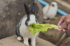 Coelho que come o alimento Fotos de Stock Royalty Free
