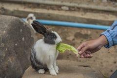 Coelho que come vegetais Imagens de Stock Royalty Free