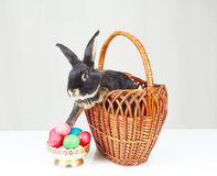 Coelho que senta-se em uma cesta ao lado de um vaso com ovos da páscoa Imagem de Stock Royalty Free