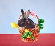 Coelho que senta-se em uma cesta decorada com fitas coloridas Fotografia de Stock Royalty Free
