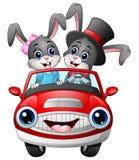 Coelho romântico dos desenhos animados dos pares que conduz um carro Fotos de Stock Royalty Free