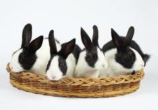 Coelhos bonitos Fotografia de Stock Royalty Free
