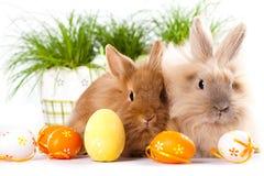 Coelhos bonitos com ovos da páscoa Fotos de Stock Royalty Free