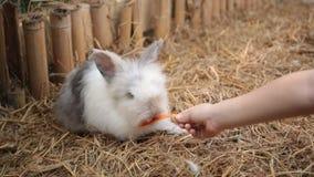 Coelhos bonitos em uma gaiola que comem uma cenoura vídeos de arquivo