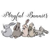 Coelhos brincalhão, coelhos, divertimento bonito do coelho Imagens de Stock Royalty Free