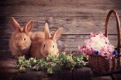 coelhos com flores da mola Foto de Stock Royalty Free