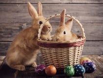 Coelhos com ovos da páscoa Fotografia de Stock Royalty Free
