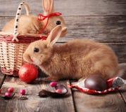 Coelhos com ovos de chocolate Fotos de Stock