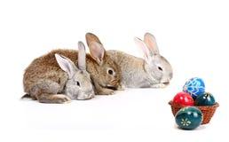 Coelhos de Easter Imagem de Stock Royalty Free
