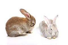 Coelhos de Easter Foto de Stock Royalty Free