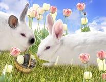 Coelhos e ovos de chocolate fotos de stock royalty free