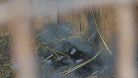 Coelhos nascidos Coelhos novos no ninho filme