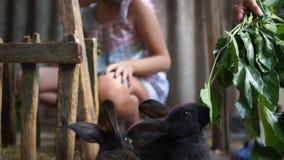 Coelhos pequenos de alimentação em uma gaiola Uma família dos coelhos pretos que comem a folha verde dos ramos em sua pena em uma vídeos de arquivo