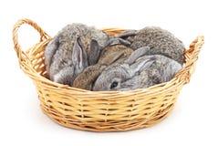 Coelhos pequenos em uma cesta imagens de stock