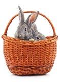 Coelhos pequenos em uma cesta fotografia de stock