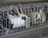 Coelhos prendidos na criação de animais, foco seletivo Fotos de Stock