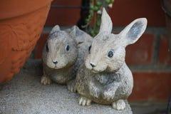 coelhos imagens de stock
