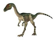 coelophysis del dinosauro della rappresentazione 3D su bianco illustrazione vettoriale