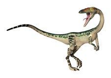 coelophysis del dinosauro della rappresentazione 3D su bianco illustrazione di stock