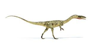 Coelophysis dinosaur photorealistic representation. On white bac Royalty Free Stock Photos