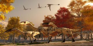 Coelophysis Hunting Stock Photos