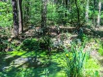 Coelophysis polowanie w lesie obraz stock