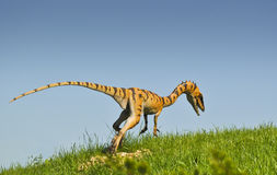 Coelurus - carnivorous killer from Jurassic period Stock Photography