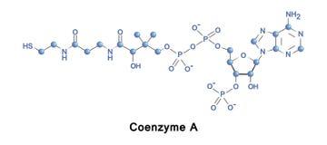 Coenzyme Α κύκλος κιτρικού οξέος διανυσματική απεικόνιση