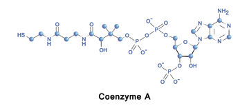 Coenzyme A citric acid cycle. Royalty Free Stock Photography