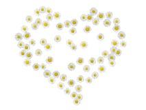 Coeur 2 de marguerite Images libres de droits