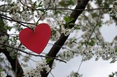 Coeur accrochant dans l'arbre de floraison Photographie stock libre de droits